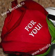 говорящая роза