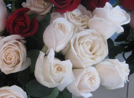 Скачать бесплатно открытки большие красивые розовые розы 2