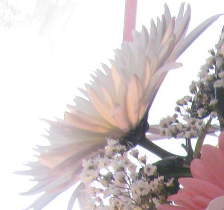 Любимые цветы говорящие цветы